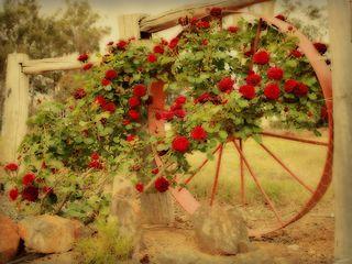 Work_4102480_2_flat,550x550,075,f_vintage-roses